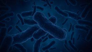 MICROBES, BACTÉRIES ET VIRUS : QUELLES DIFFÉRENCES ?